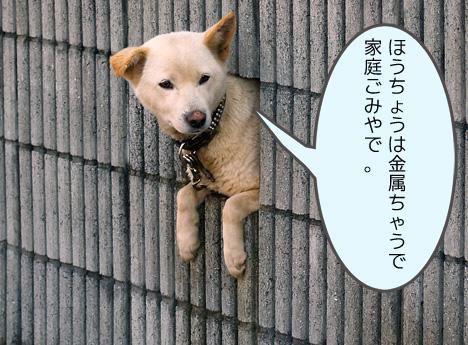 inu_serifu3.jpg